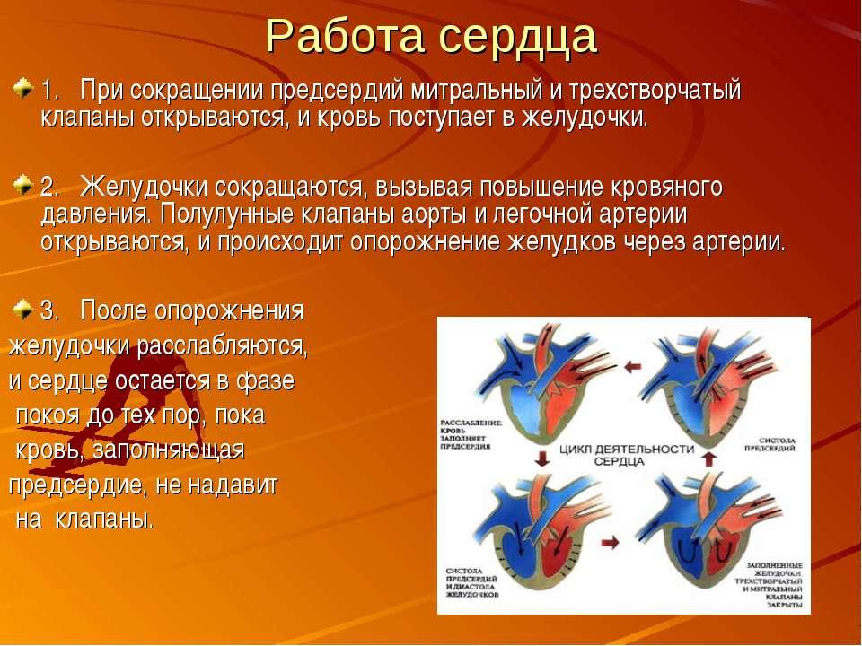 Работа сердца 1. При сокращении предсердий митральный и трехстворчатый клапан...