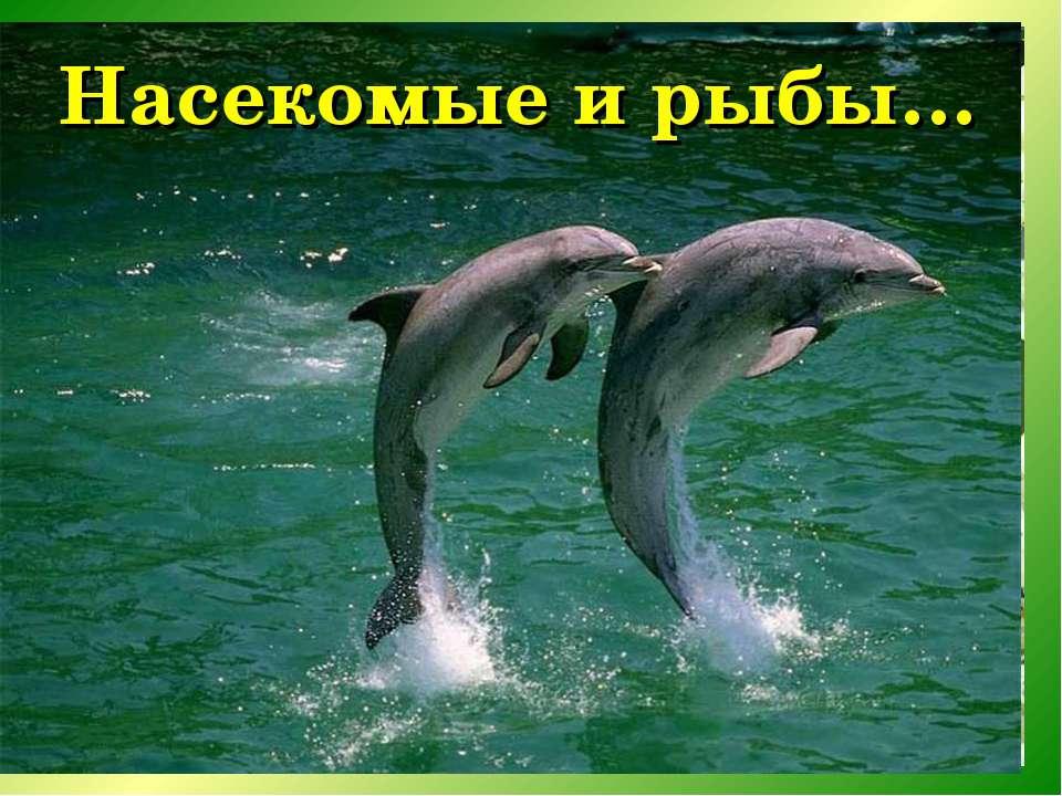 Насекомые и рыбы…
