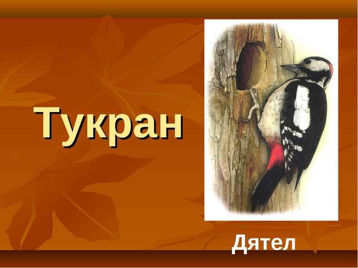 Тукран Дятел