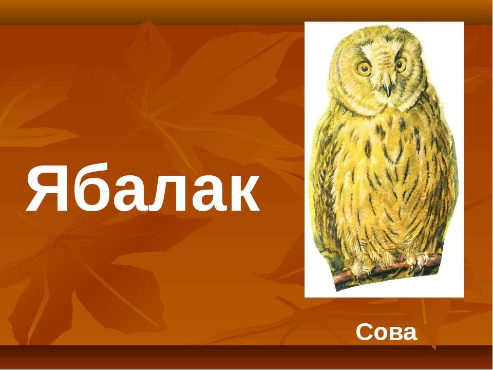 Сова Ябалак