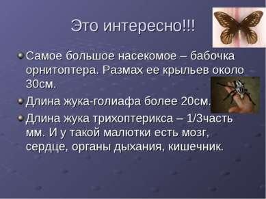 Это интересно!!! Самое большое насекомое – бабочка орнитоптера. Размах ее кры...