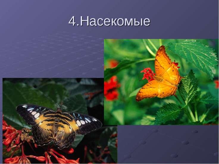 4.Насекомые