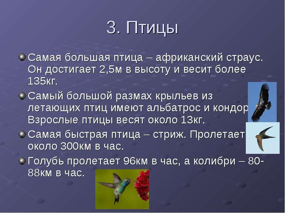 3. Птицы Самая большая птица – африканский страус. Он достигает 2,5м в высоту...