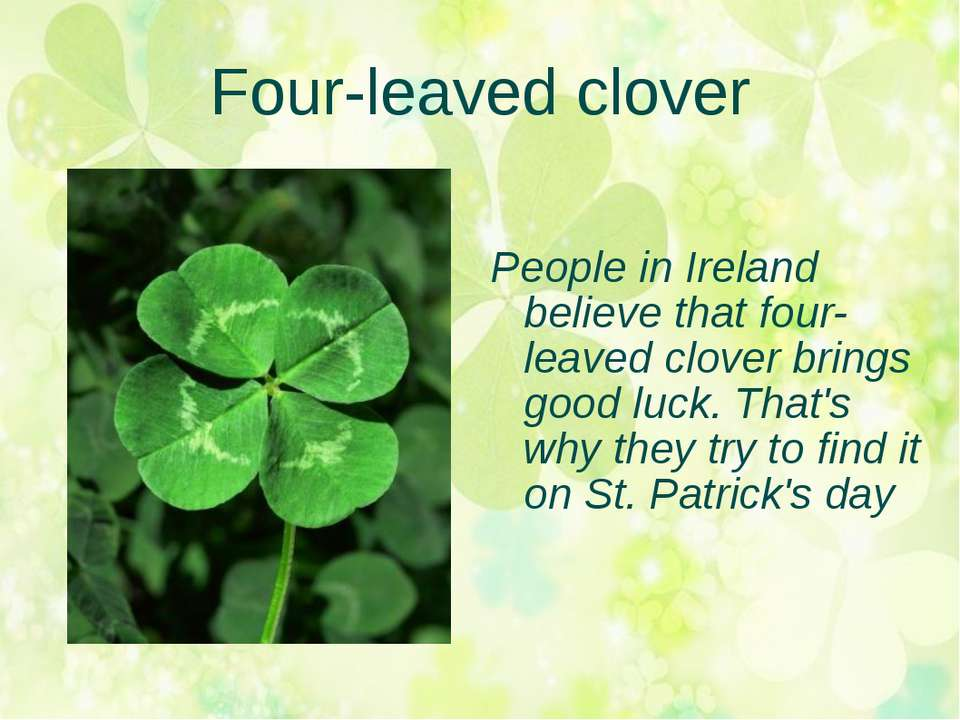 Four-leaved clover People in Ireland believe that four-leaved clover brings g...