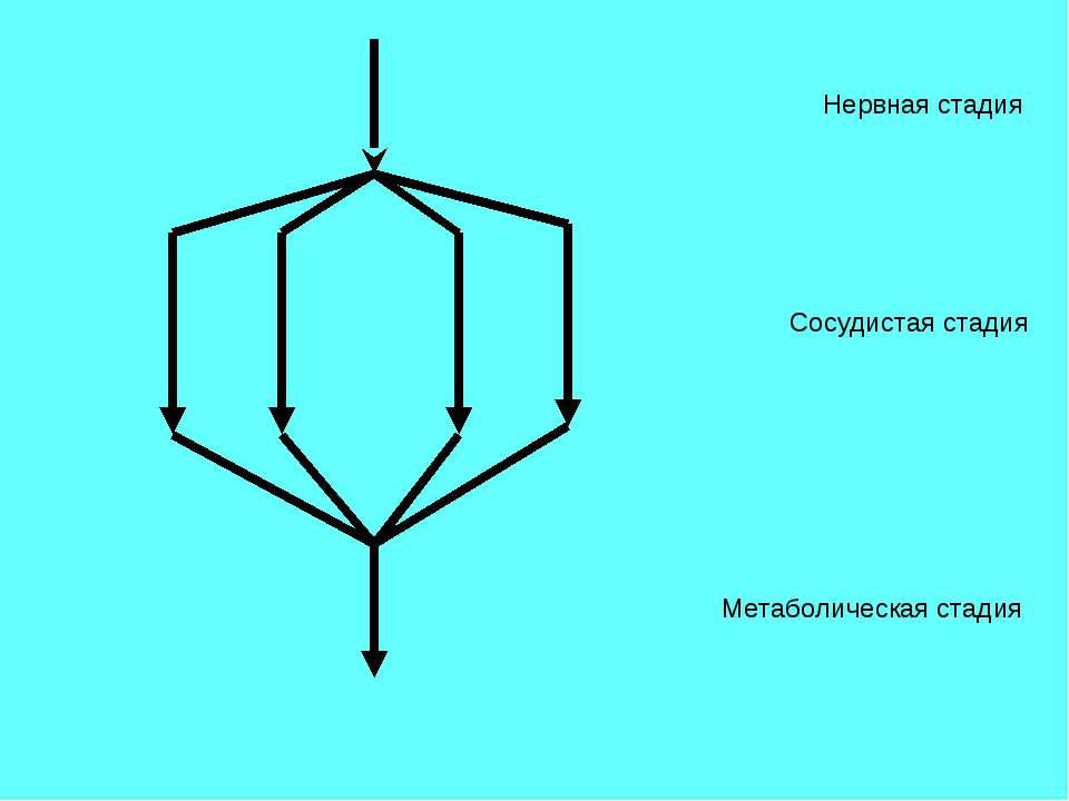 Нервная стадия Сосудистая стадия Метаболическая стадия