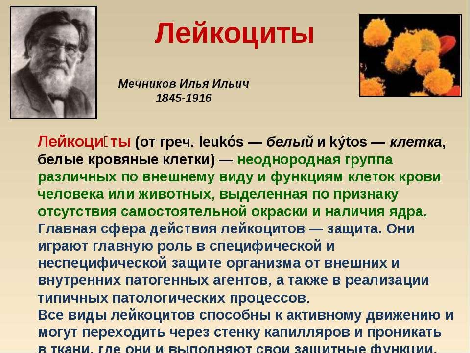 Лейкоциты Лейкоци ты (от греч. leukós— белый и kýtos— клетка, белые кровяны...