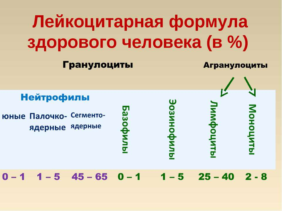 Лейкоцитарная формула здорового человека (в %)