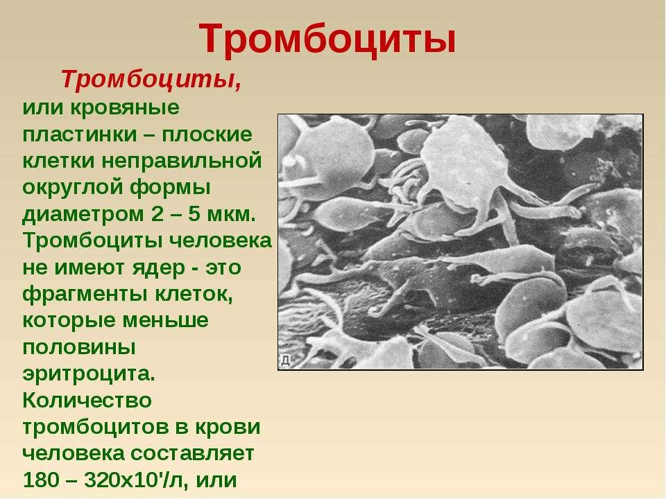 Тромбоциты Тромбоциты, или кровяные пластинки – плоские клетки неправильной о...