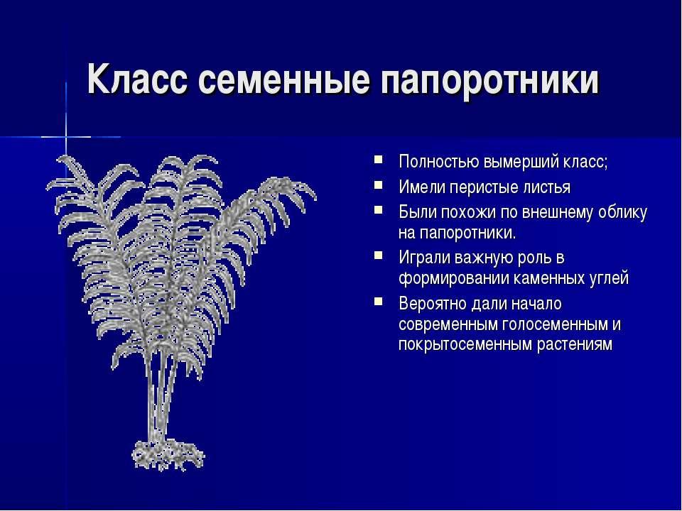 Класс семенные папоротники Полностью вымерший класс; Имели перистые листья Бы...