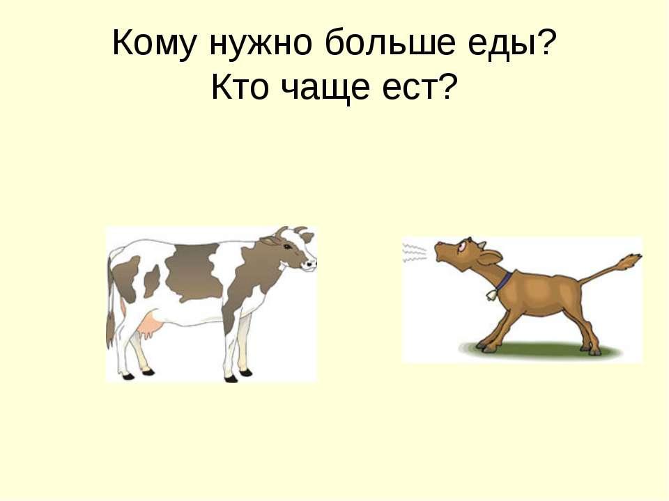 Кому нужно больше еды? Кто чаще ест?