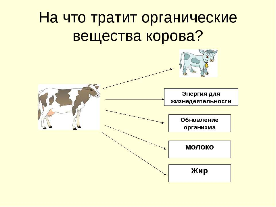 На что тратит органические вещества корова? Энергия для жизнедеятельности Обн...