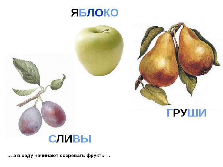... а в саду начинают созревать фрукты … ГРУШИ СЛИВЫ ЯБЛОКО
