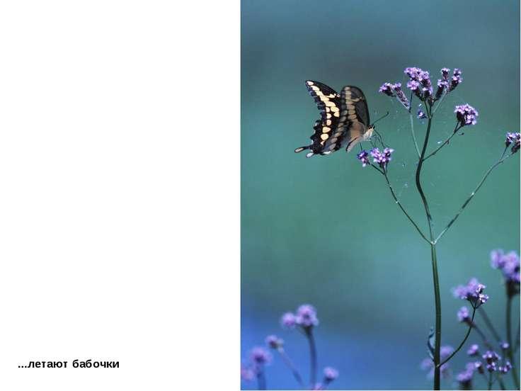 ...летают бабочки