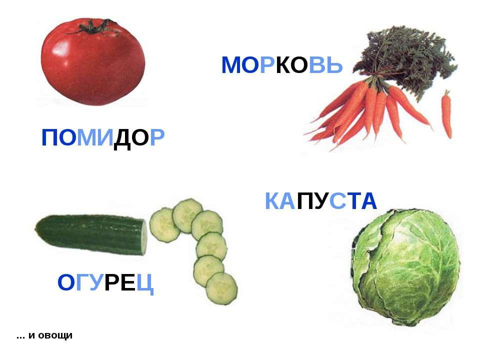 ... и овощи КАПУСТА ПОМИДОР МОРКОВЬ ОГУРЕЦ