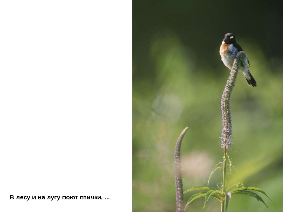 В лесу и на лугу поют птички, ...