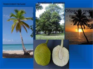 Хлебное дерево Кокосовая пальма
