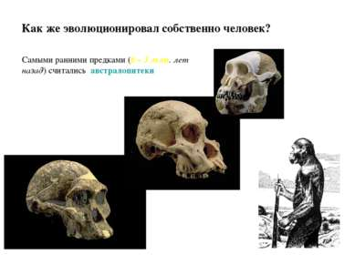 Как же эволюционировал собственно человек? Самыми ранними предками (6 – 3 млн...