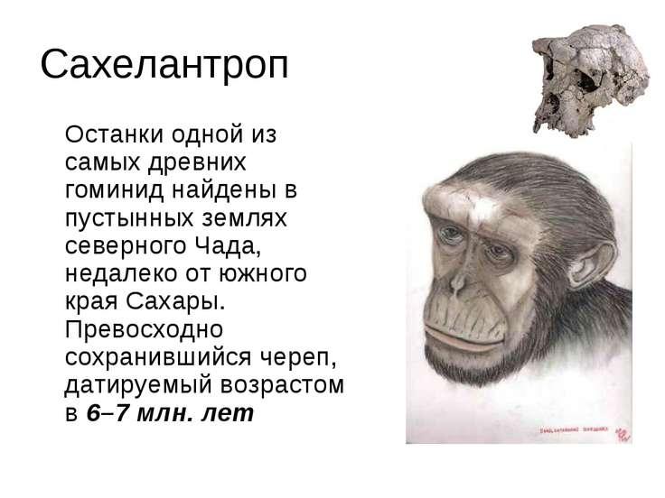 Сахелантроп Останки одной из самых древних гоминид найдены в пустынных землях...