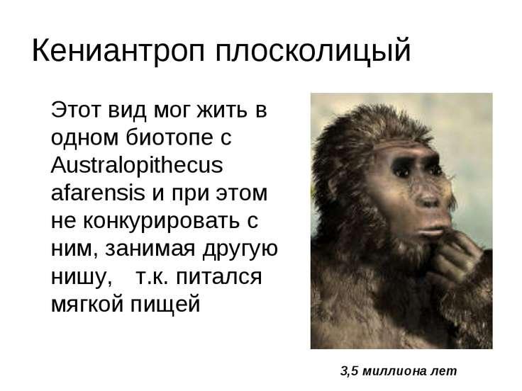 Кениантроп плосколицый Этот вид мог жить в одном биотопе с Australopithecus a...