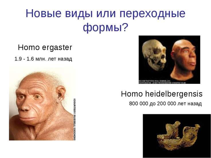 Новые виды или переходные формы? Homo ergaster Homo heidelbergensis 800 000 д...