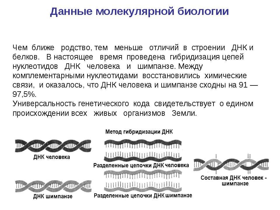 Чем ближе родство, тем меньше отличий в строении ДНК и белков. В настоящее вр...