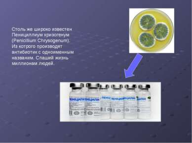 Столь же широко известен Пенициллиум хризогенум (Penicillium Chrysogenum). Из...