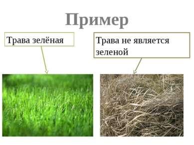 Пример Трава зелёная Трава не является зеленой