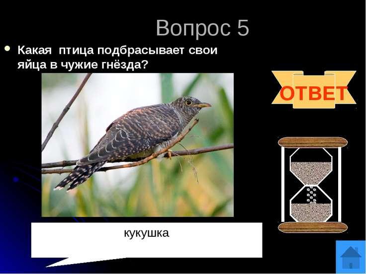Вопрос 6 За что сову называют «лесной кошкой? ОТВЕТ Ловит мышей