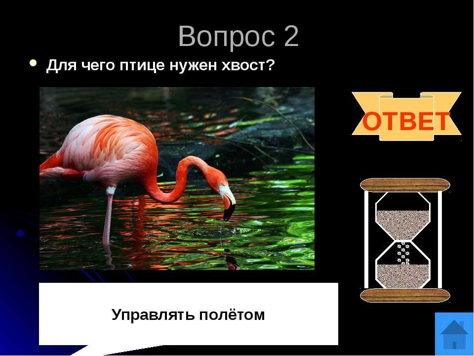 Вопрос 3 Какой хищный зверь любит малину?. ОТВЕТ медведь