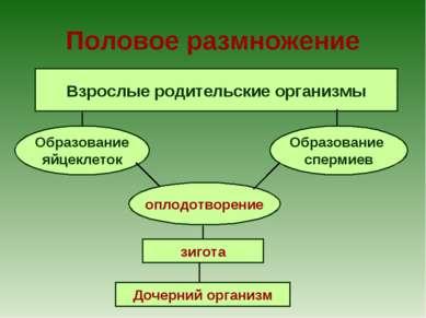 Половое размножение Взрослые родительские организмы Образование яйцеклеток Об...