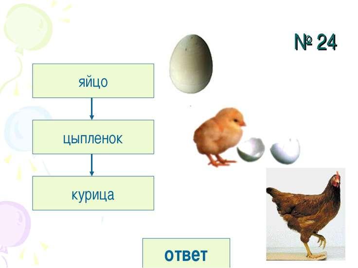 № 24 яйцо цыпленок курица ответ