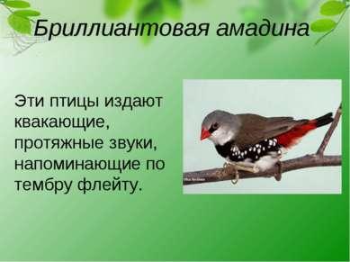 Бриллиантовая амадина Эти птицы издают квакающие, протяжные звуки, напоминающ...