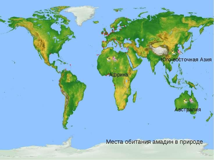 Места обитания амадин в природе Африка Австралия Юго-восточная Азия