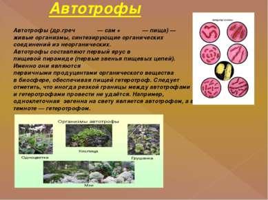 Автотрофы Автотрофы(др.гречαὐτός—сам+τροφή—пища)— живые организмы, с...