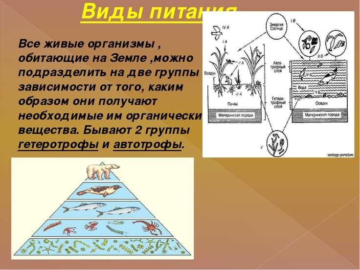 Виды питания. Все живые организмы , обитающие на Земле ,можно подразделить на...
