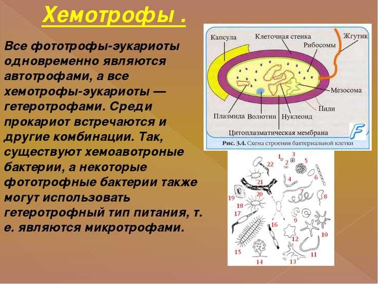 Хемотрофы . Все фототрофы-эукариоты одновременно являются автотрофами, а все ...