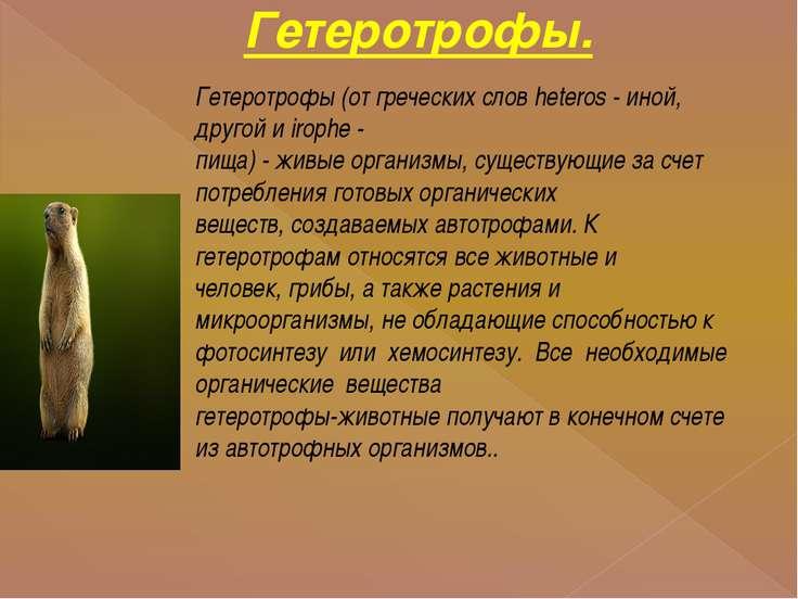 Гетеротрофы. Гетеротрофы (от греческих слов heteros - иной, другой и irophe -...