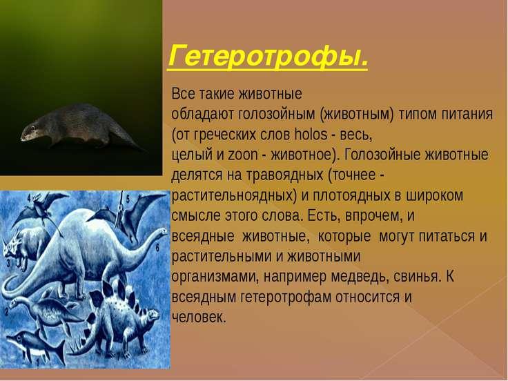 Гетеротрофы. Все такие животные обладают голозойным (животным) типом питания ...