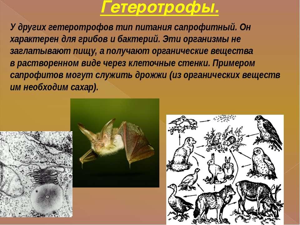 Гетеротрофы. У других гетеротрофов тип питания сапрофитный. Он характерен для...