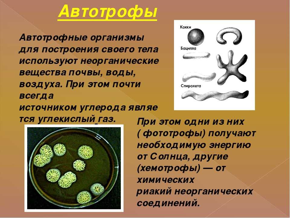 Автотрофы Автотрофные организмы для построения своего тела используют неорган...