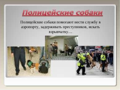 Полицейские собаки помогают нести службу в аэропорту, задерживать преступнико...