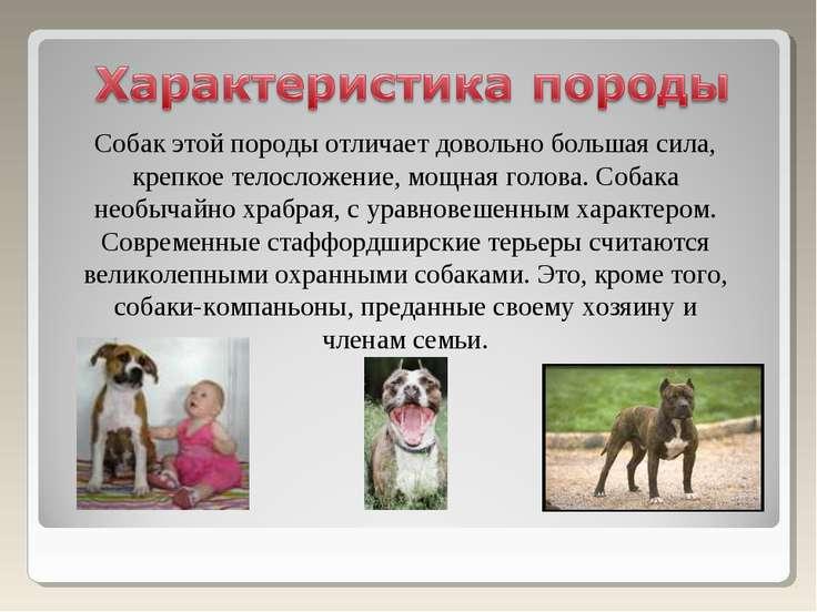Собак этой породы отличает довольно большая сила, крепкое телосложение, мощна...