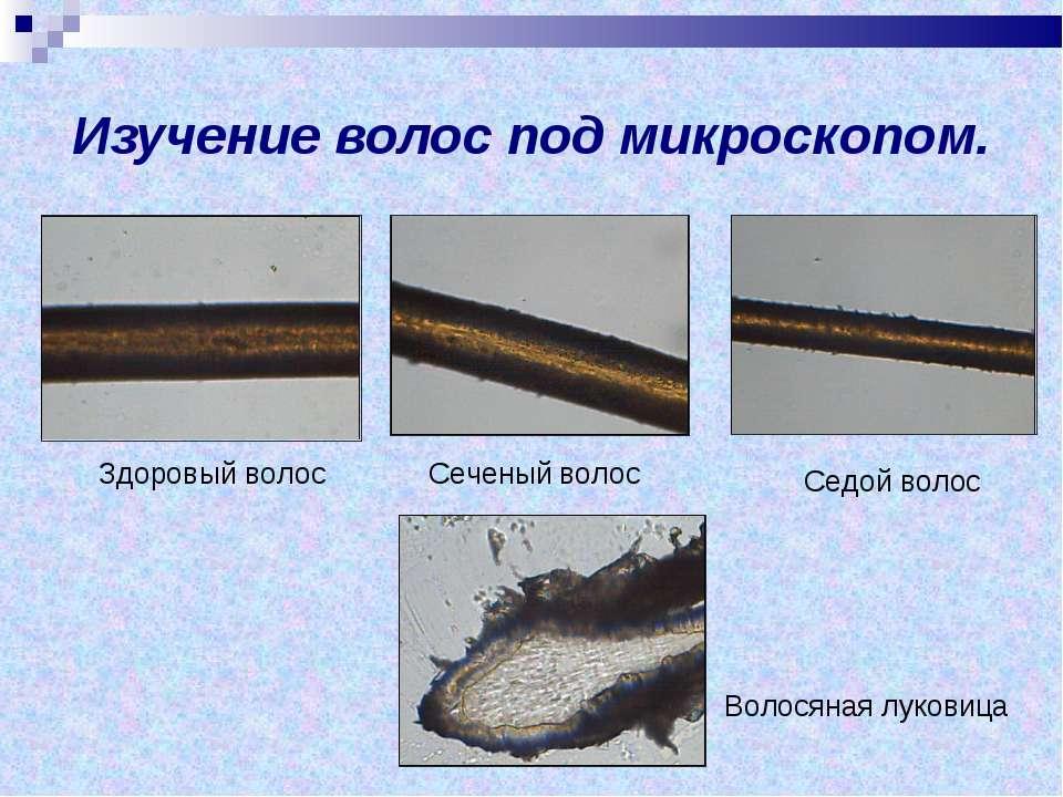 Изучение волос под микроскопом. Здоровый волос Сеченый волос Седой волос Воло...