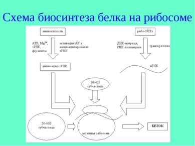 Схема биосинтеза белка на рибосоме