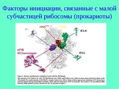 Факторы инициации, связанные с малой субчастицей рибосомы (прокариоты)