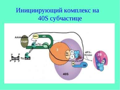 Инициирующий комплекс на 40S субчастице