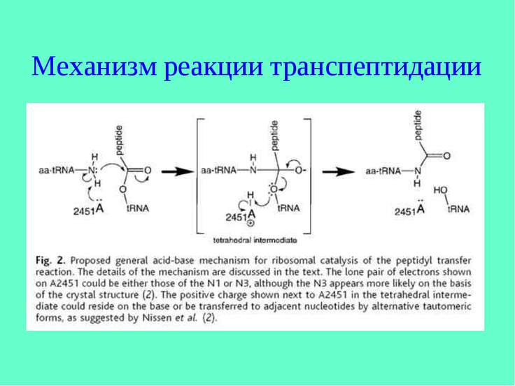 Механизм реакции транспептидации
