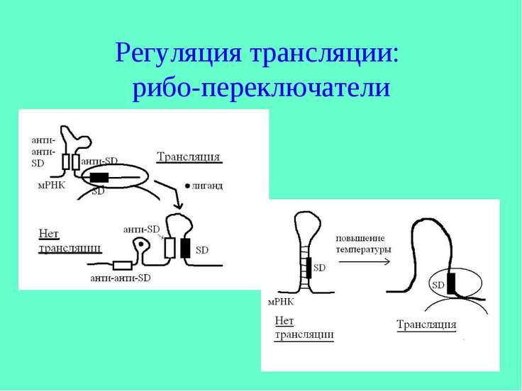 Регуляция трансляции: рибо-переключатели