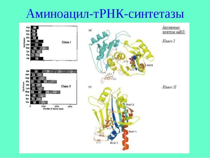 Аминоацил-тРНК-синтетазы