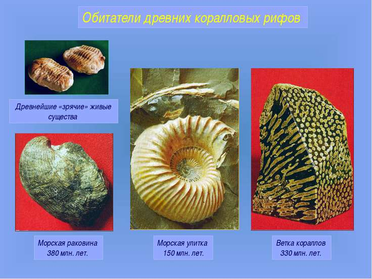 Морская раковина 380 млн. лет. Морская улитка 150 млн. лет. Ветка кораллов 33...